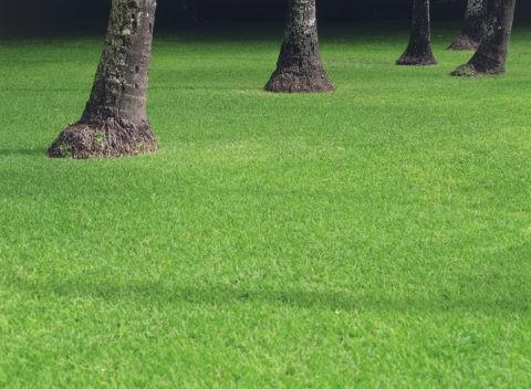 ヤシの木と影 ハワイ