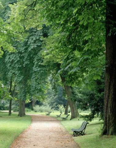 ブローニュの森 フランス パリ