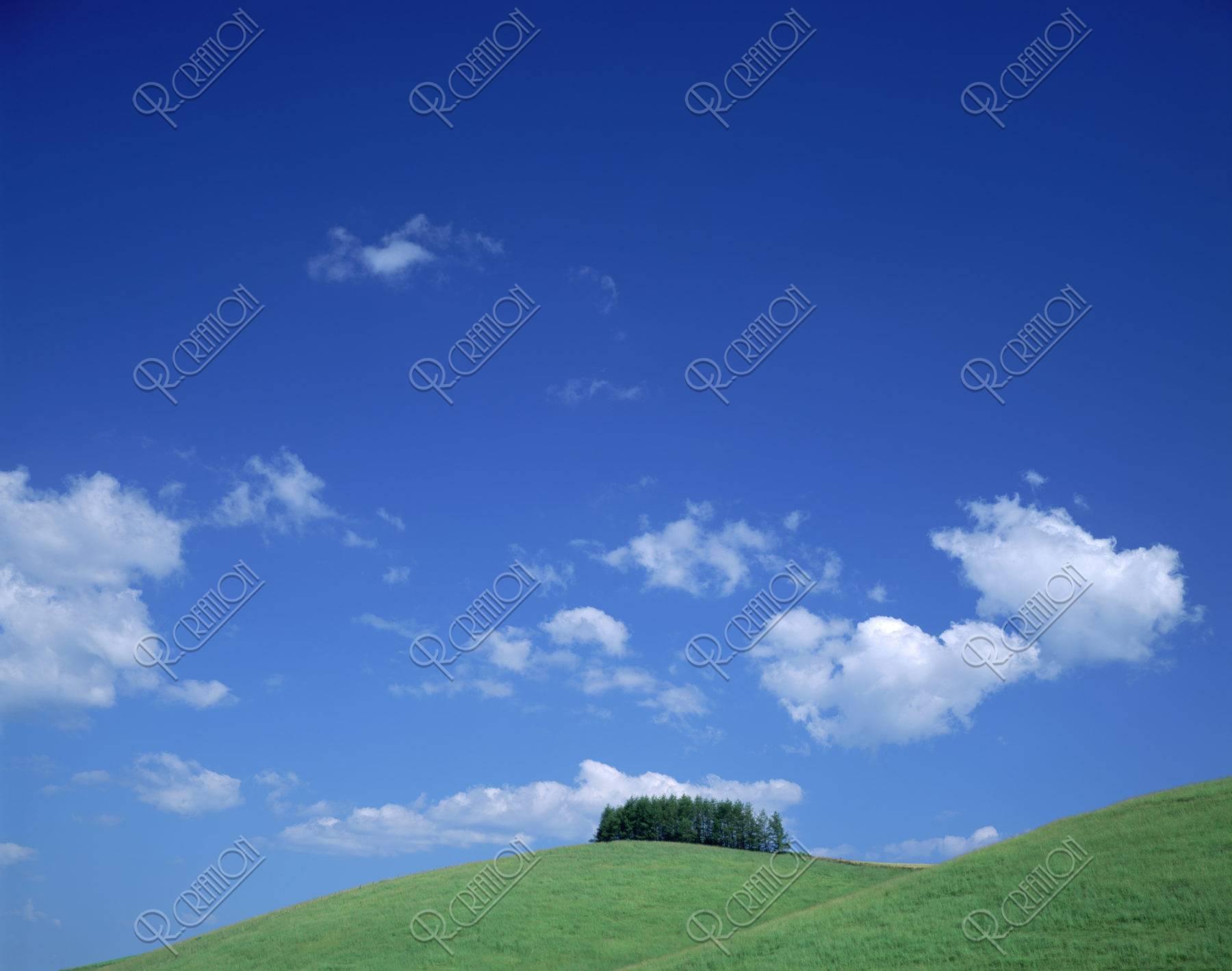 針葉樹林のある丘