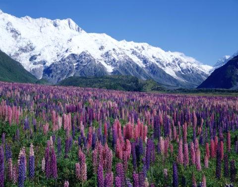 SOUTHERN ALPS ニュージーランド