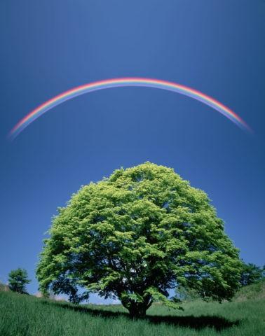 大樹と虹(創作)
