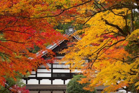 南禅寺庫裡 紅葉