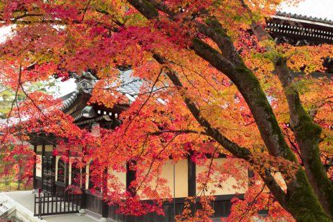 南禅寺法堂 紅葉