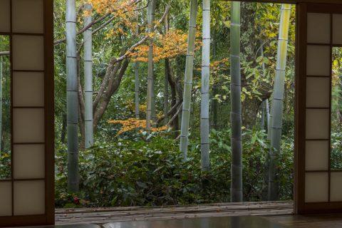 大河内山荘 竹林