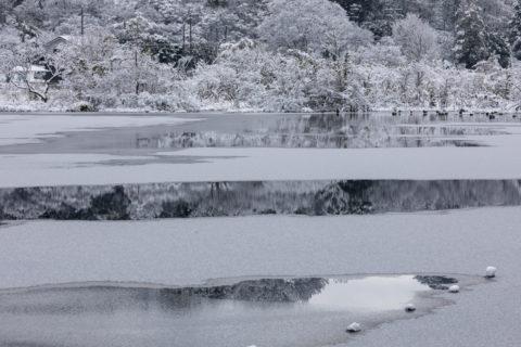 深泥池 雪