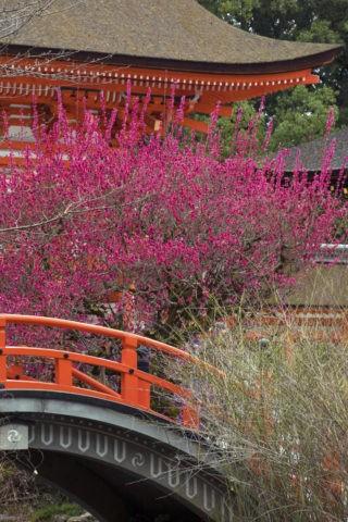下鴨神社 紅梅と輪橋