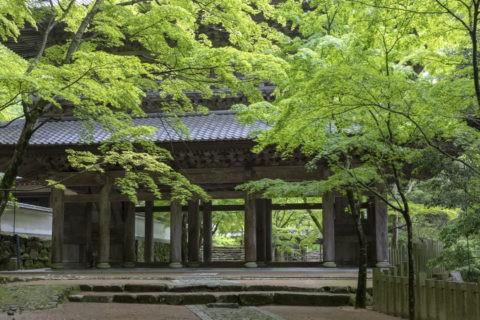 永源寺 新緑と山門