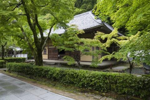 永源寺 新緑と法堂