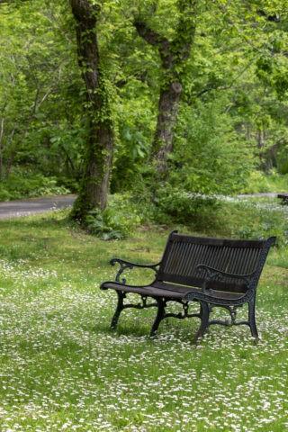 白い花とベンチ