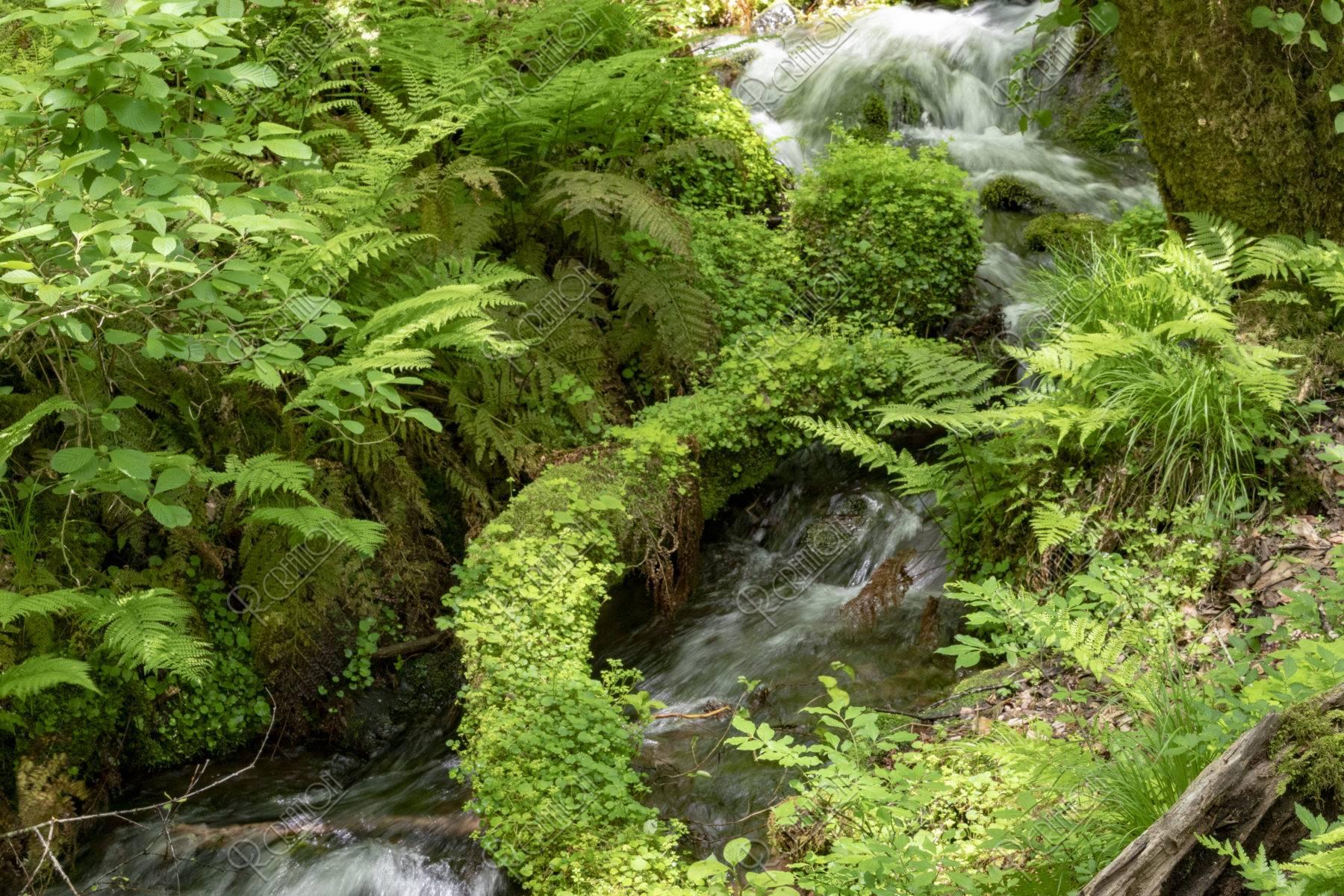 湧水と流れ