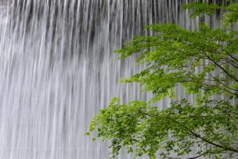 木谷沢渓流 新緑と流れ