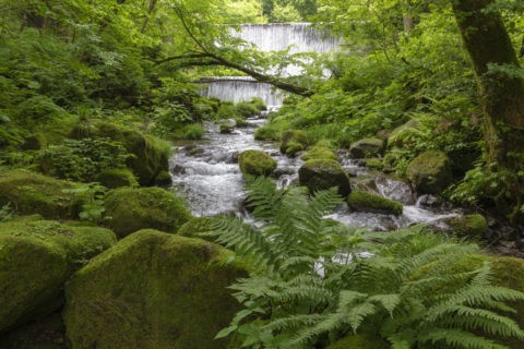 木谷沢渓流 流れ