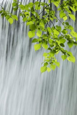 新緑と流れ