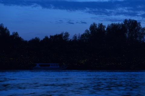 クアラセランゴール川蛍観賞ツアー
