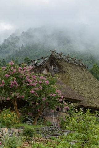 サルスベリ咲く茅葺き民家