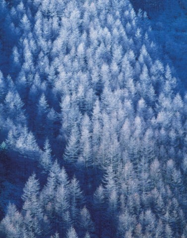 から松の霧氷