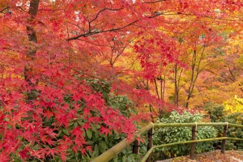 北野天満宮もみじ苑の紅葉
