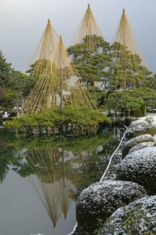 雪の兼六園 雪つり
