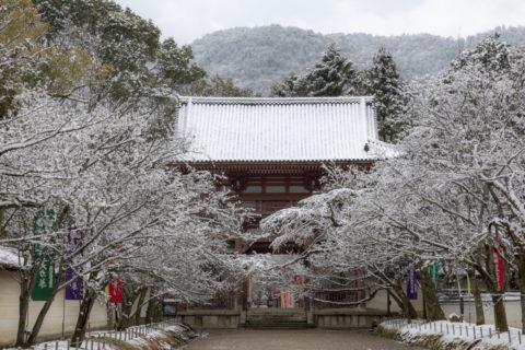 雪の醍醐寺 山門