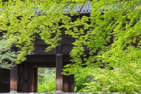 新緑の南禅寺三門