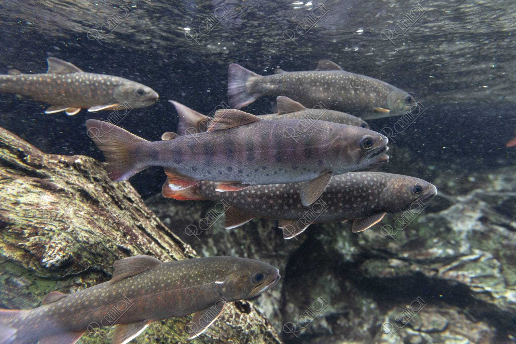 川魚の群れ