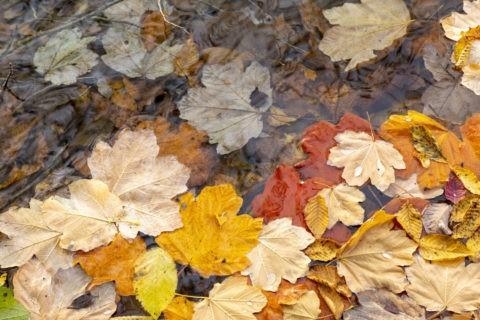 湖に浮かぶ落葉