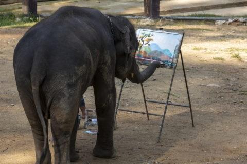 メーサーエレファントキャンプ 象のお絵かき