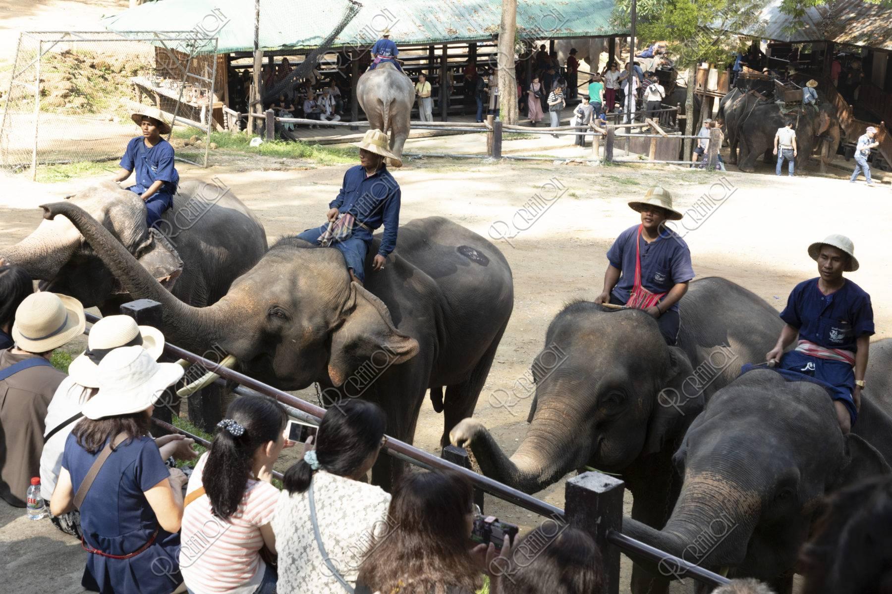 メーサーエレファントキャンプ 象のあいさつ