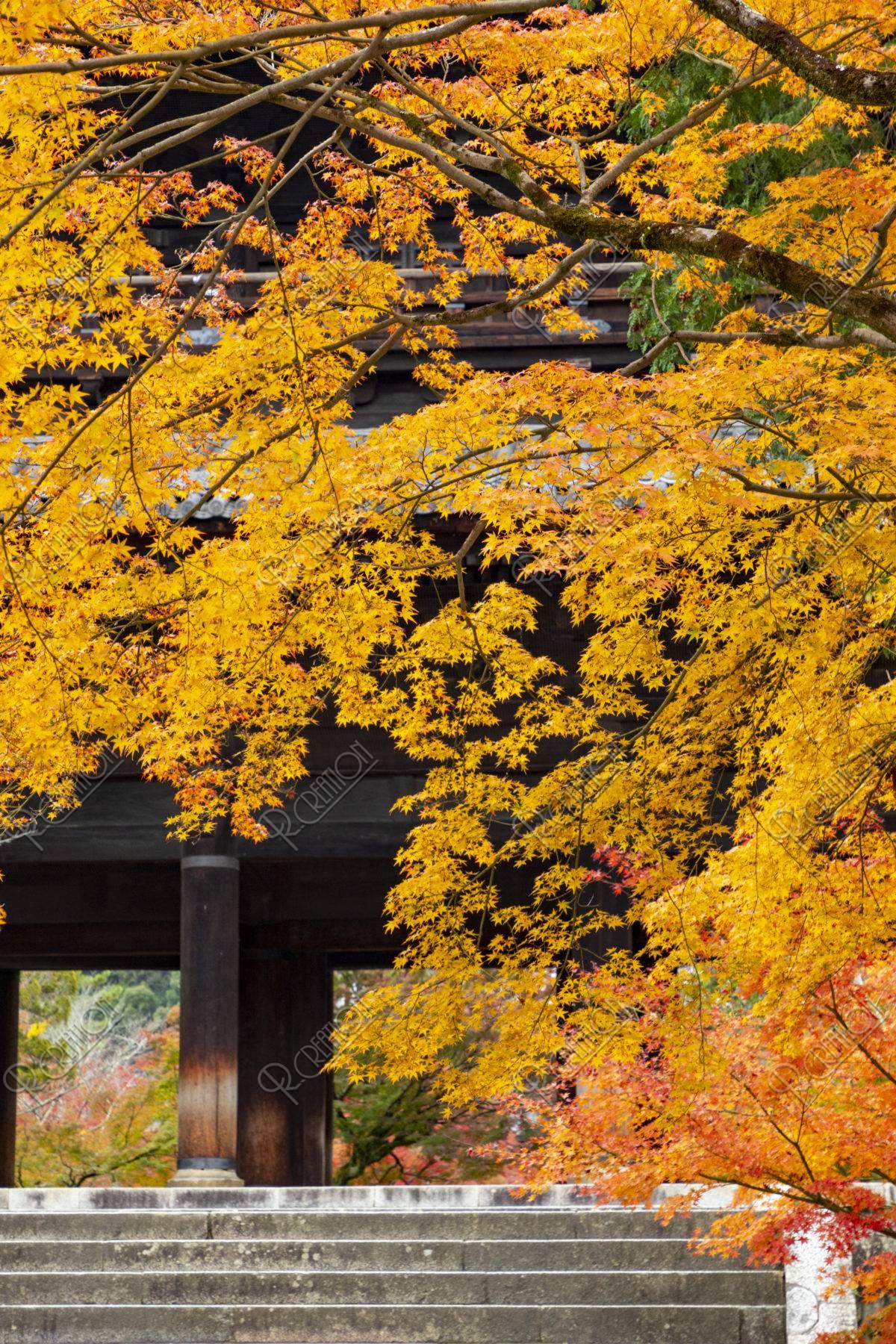 南禅寺三門の紅葉