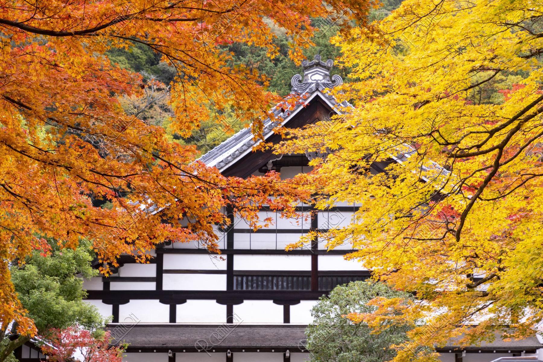 南禅寺庫裡の紅葉