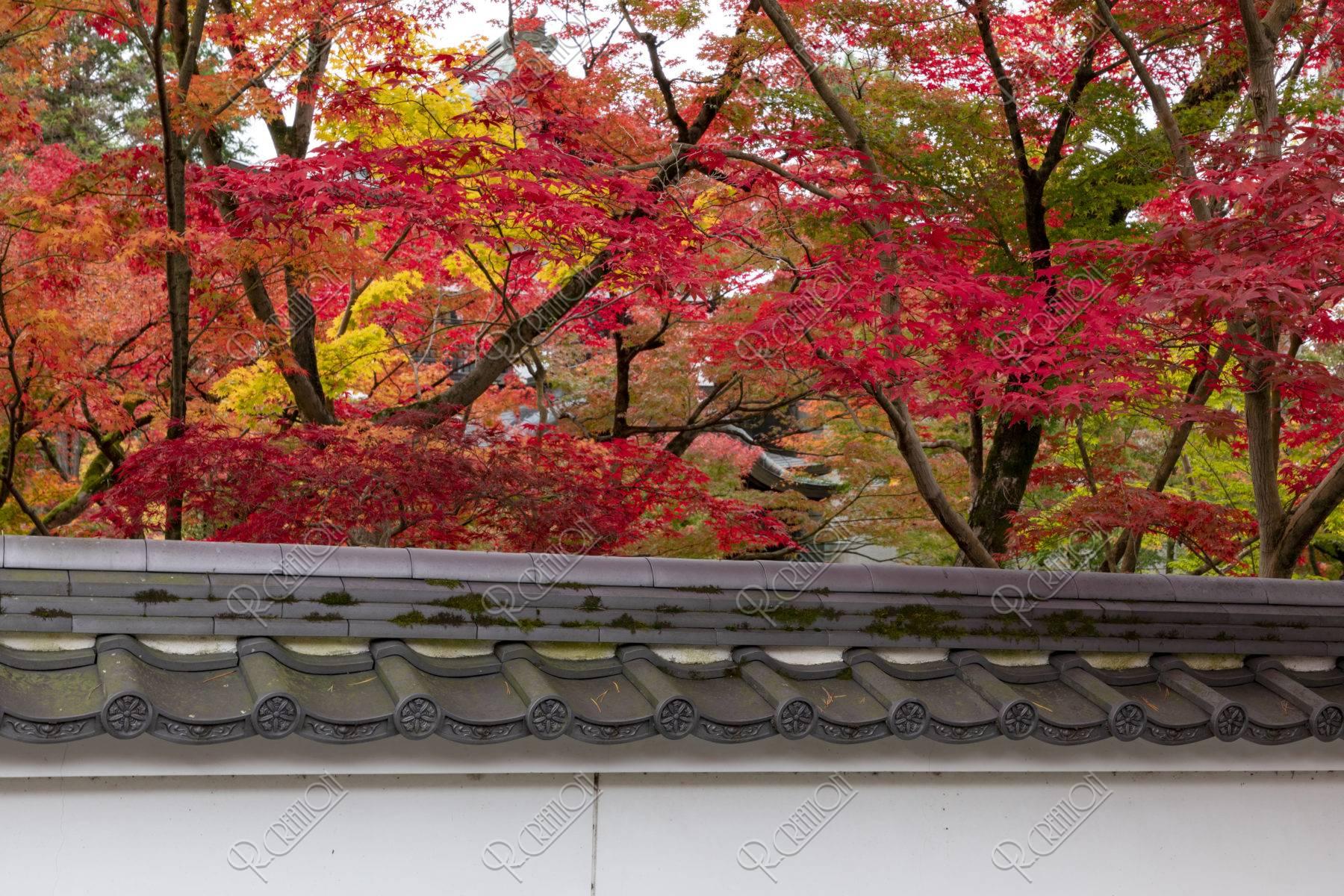 永観堂禅林寺 土塀と紅葉