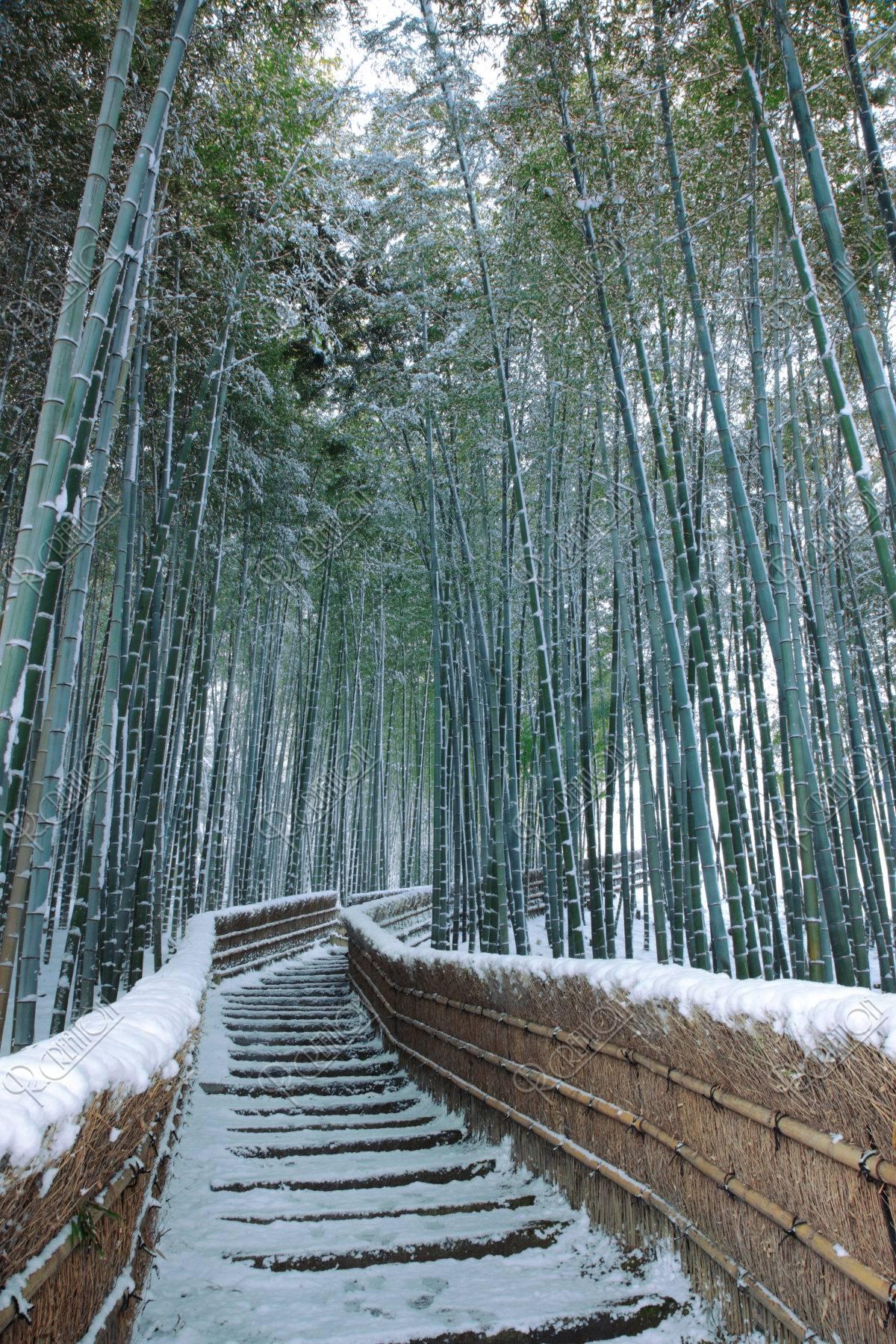 雪の竹林の道 嵯峨野