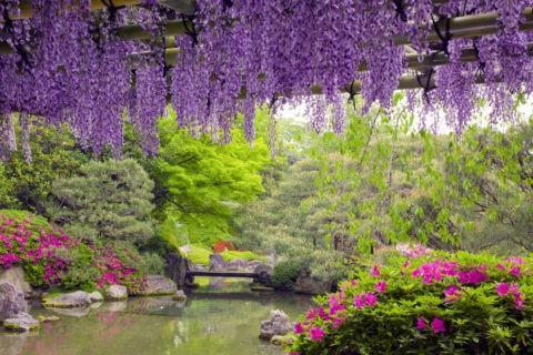 城南宮 楽水苑の藤