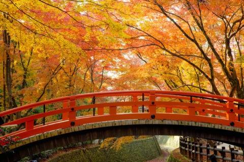 北野神社 御土居の紅葉と鴬橋