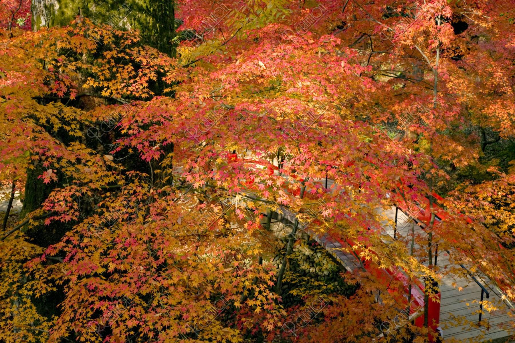 北野天満宮 御土居の紅葉