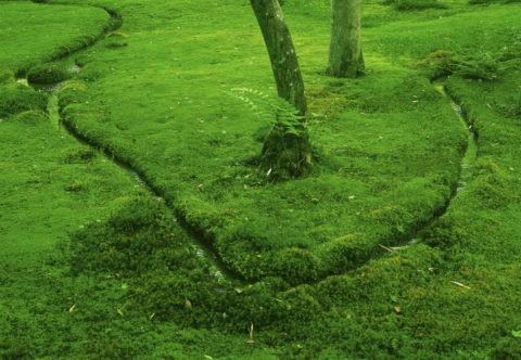 祇王寺の苔と流れ