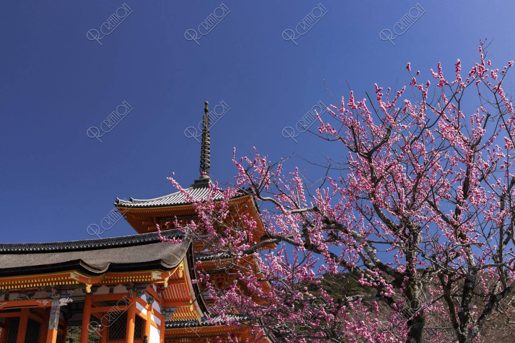 清水寺 三重塔と紅梅