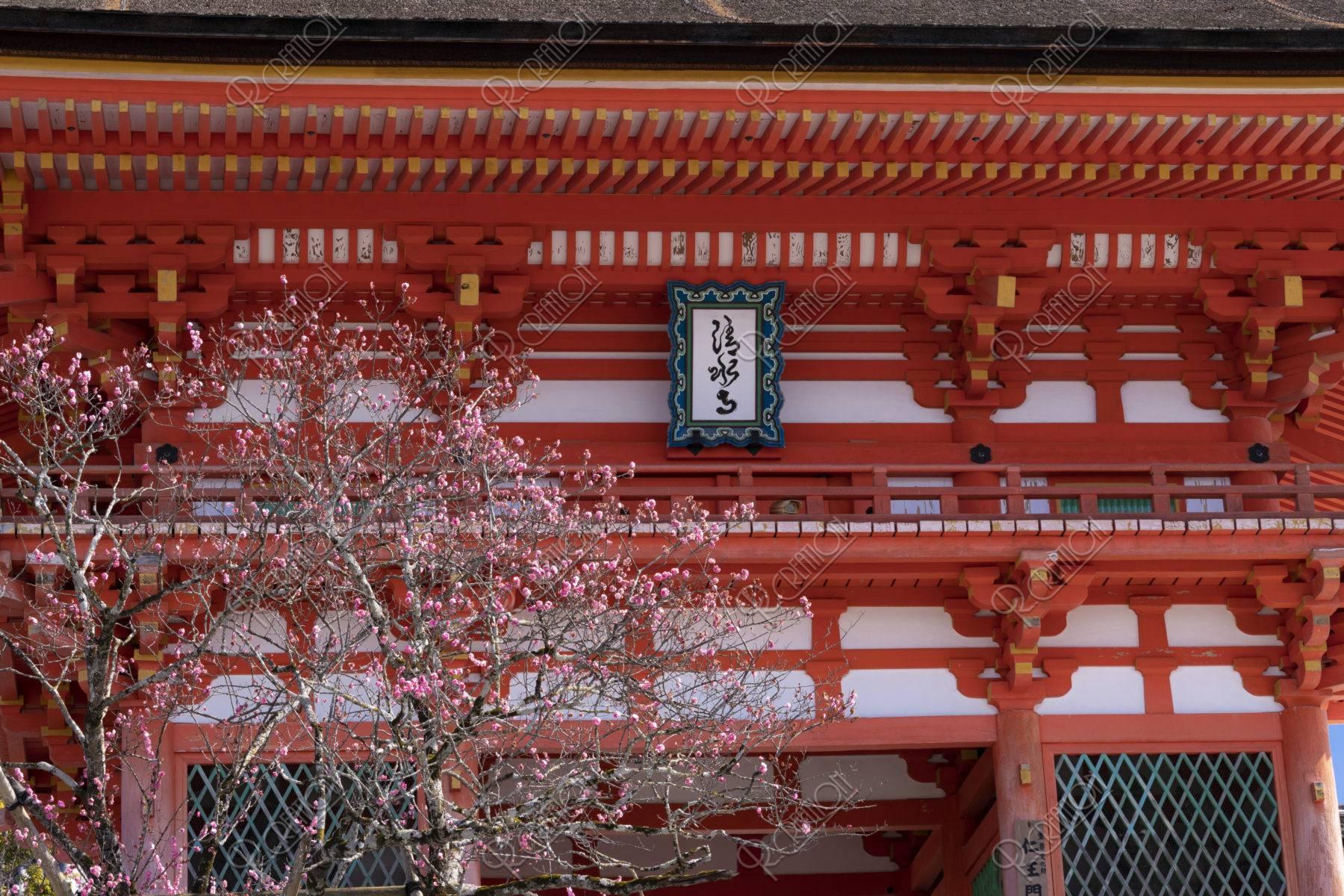 清水寺 仁王門と紅梅