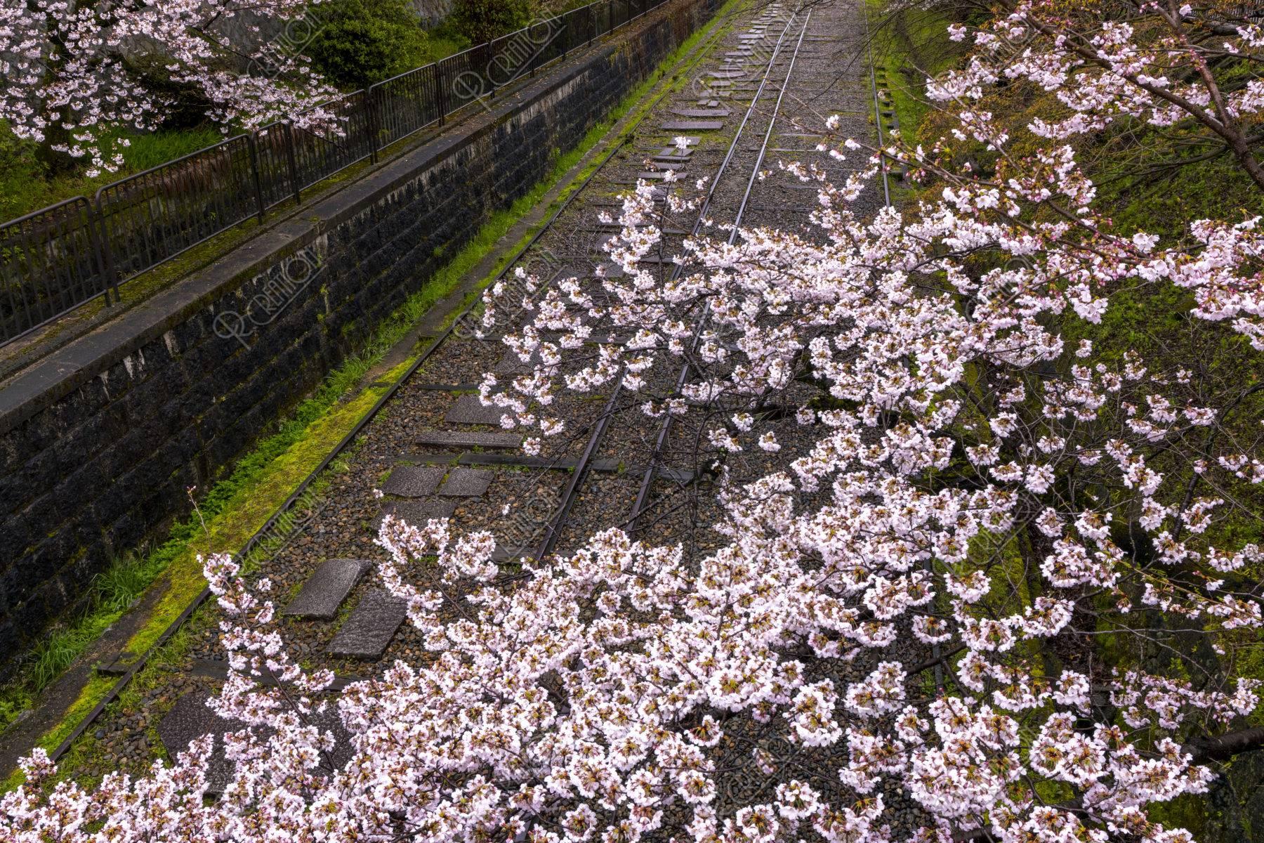 蹴上インクラインと桜