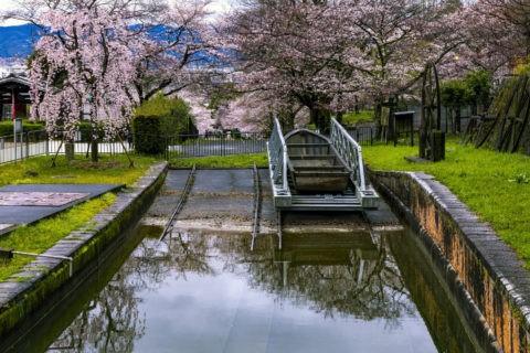 蹴上インクライン 船溜まりと桜