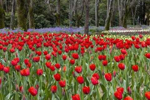 京都府立植物園 球根ガーデン