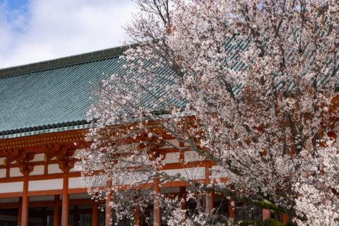 平安神宮 左近の桜と大極殿