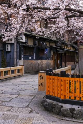 祇園白川巽橋の桜