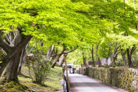 興聖寺琴坂の新緑