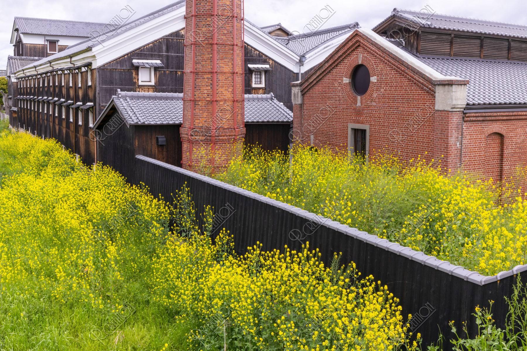 伏見松本酒造酒蔵と菜の花