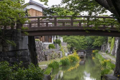 黄菖蒲咲く八幡堀