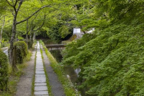 新緑の哲学の道