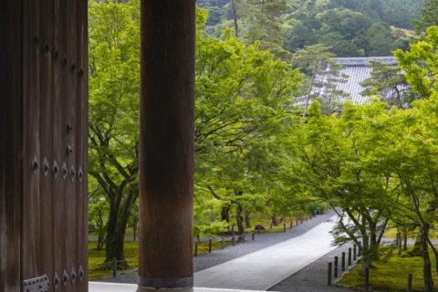 新緑の南禅寺三門と法堂