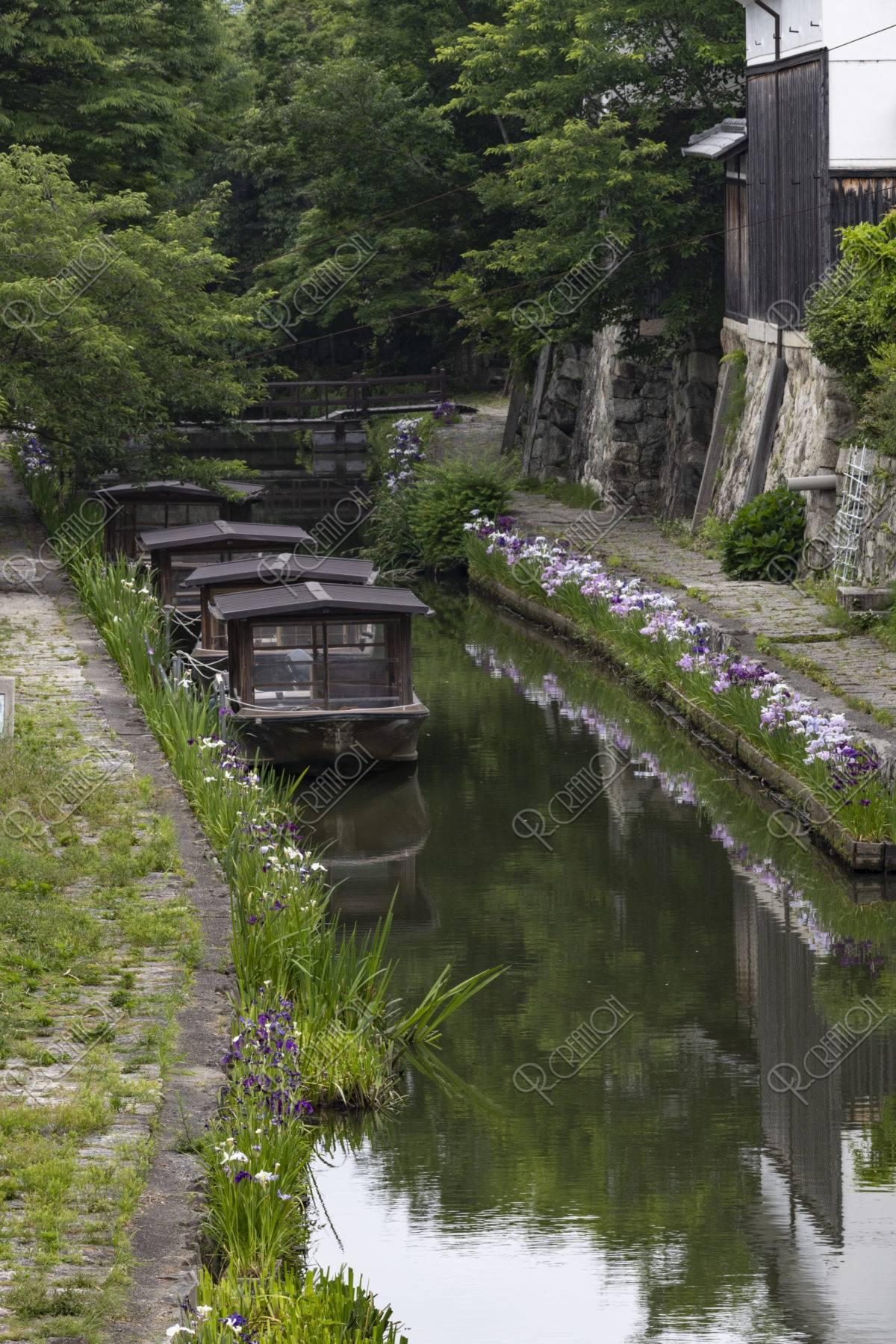 八幡堀の花菖蒲