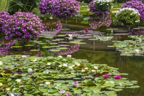 草津市立水生植物公園